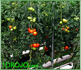 DROJO hydroponic growhouses are perfect for indoor gardening.